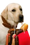 Sausage and a dog royalty free stock image