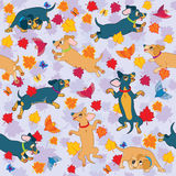 Sausage dogs love fall wallpaper pattern Royalty Free Stock Photos