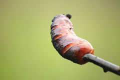 Sausage prick green background nature barbecue Royalty Free Stock Images