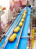 Sausages on conveyor belt at food factory. Sausages on a conveyor belt at a food factory stock images