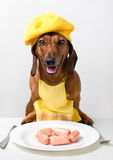 Sausages for dog Stock Photos