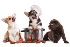 Sausages and dogs stock photo