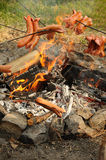 Sausages over campfire Stock Image