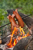 Sausages on a stick Stock Photography