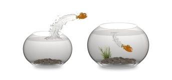 saut de poissons de dessin animé illustration libre de droits