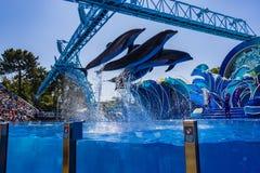 Saut des dauphins photographie stock libre de droits