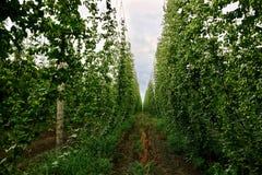 Saute à cloche-pied le yard en été Produits agricoles frais organiques, ingrédients de bière images libres de droits