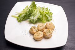 Saute of scallops Stock Photography