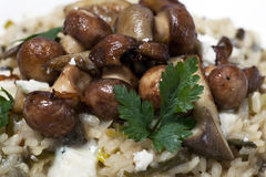 Sauted Mushrooms over Risotto Stock Image