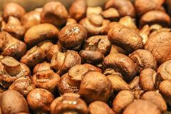 Sauted Brown Button Mushrooms. Sauted pile of Brown Button Mushrooms Stock Photography