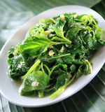Sauteed garlic spinach. Healthy diet vegetarian garlic spinach dish Royalty Free Stock Photo