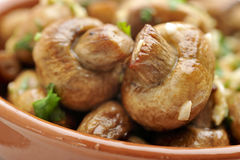 Sauteed mushrooms Stock Images