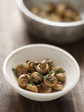 Sauteed mushrooms Stock Image