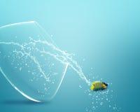 Sauter d'Angelfish du fishbowl images libres de droits