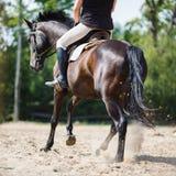 Sauter de cavalier de cheval Photos stock