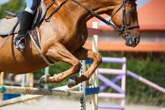 Sauter de cavalier de cheval Photo libre de droits