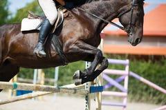 Sauter de cavalier de cheval Images libres de droits