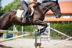 Sauter de cavalier de cheval Image stock