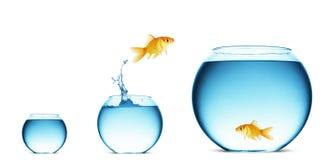 Sauter de Goldfish de l'eau image stock