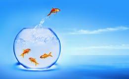Sauter de Goldfish de l'eau Photo libre de droits