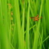 sauterelle Photo stock