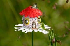 Sauterelle de Chambre de fleur Photos libres de droits