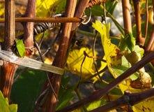 Sauterelle et insecte de puanteur photos stock