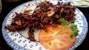 Sauterelle, grillons un repas exotique photo libre de droits