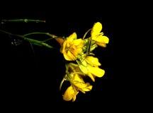 Sauterelle minuscule Photographie stock libre de droits