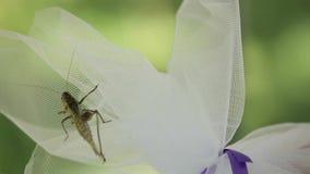 Sauterelle sur la fleur clips vidéos