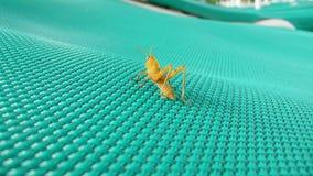 Sauterelle sur un lit 2 du soleil photographie stock libre de droits