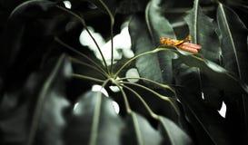 Sauterelle sur une lame Photographie stock