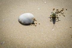 Sauterelle sur une plage Images libres de droits