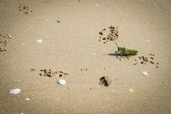 Sauterelle sur une plage Image stock