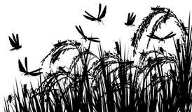 Sauterelles sur le riz Photographie stock