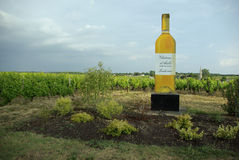 sautern wineyard Royaltyfri Bild