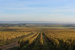 Sauterne Wineyards στο σούρουπο στοκ εικόνα