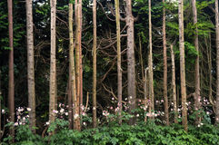 ` Sauvage s d'arbre photos stock
