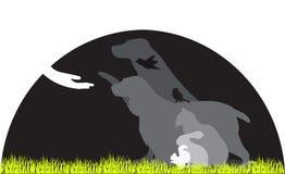 Sauvetage animal Photo stock