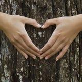 Sauvetage de notre forêt Photo stock