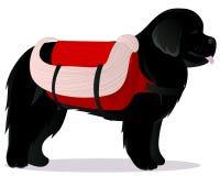 Sauveteur de chien de Terre-Neuve Images stock