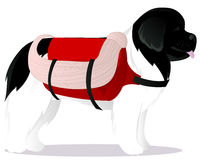 Sauveteur de chien de Terre-Neuve Photographie stock libre de droits