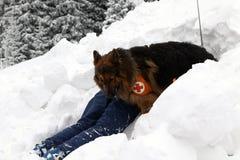 Sauveteur du service de délivrance de montagne Image libre de droits