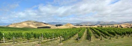 Sauvignon Blanc druvavinrankor i den Awatere dalen Marlborough nya Ze royaltyfri fotografi