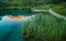 Sava spring, Zelenci, Slovenia Royalty Free Stock Photos