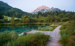 Sava spring, Zelenci, Slovenia Royalty Free Stock Photo