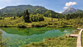 Sava spring, Zelenci, Slovenia Royalty Free Stock Photography