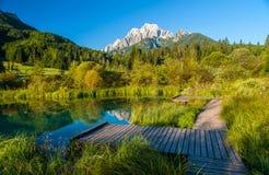 Sava vår, Zelenci, Slovenien Royaltyfria Bilder