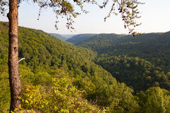 Savage Gulf State Natural Area Royalty Free Stock Images