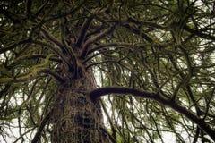 Savage Tree Fotografía de archivo